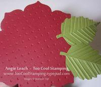 Poinsettia - leaves back
