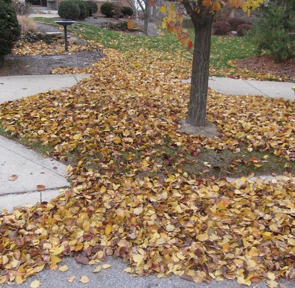 Dang leaves