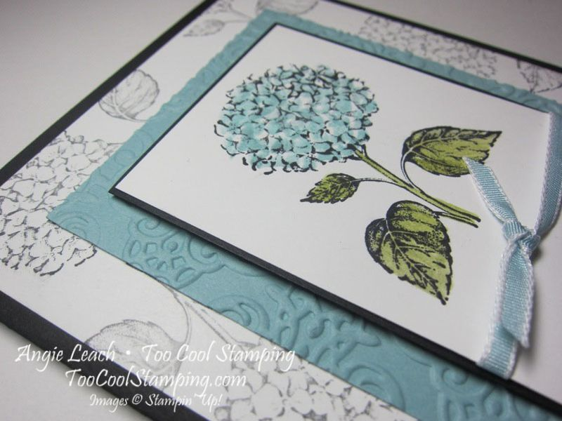 Best of flowers hydrangea 3