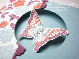 Papillon sorry - window 2