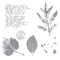 French foliage121166L