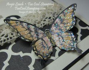 Papillon potpourri medley - color3