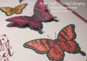 Papillon blended butterflies - perfect life 3
