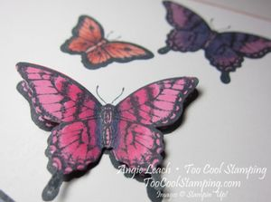 Papillon blended butterflies - too much happy 2