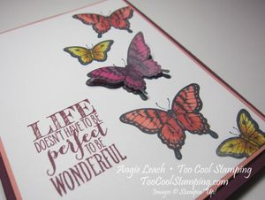Papillon blended butterflies - perfect life 4