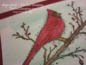 Beauty cardinal - peace joy 3