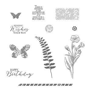 Buttefly basics 138816G