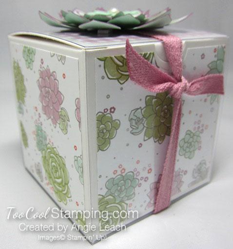 Succulent gift box 3