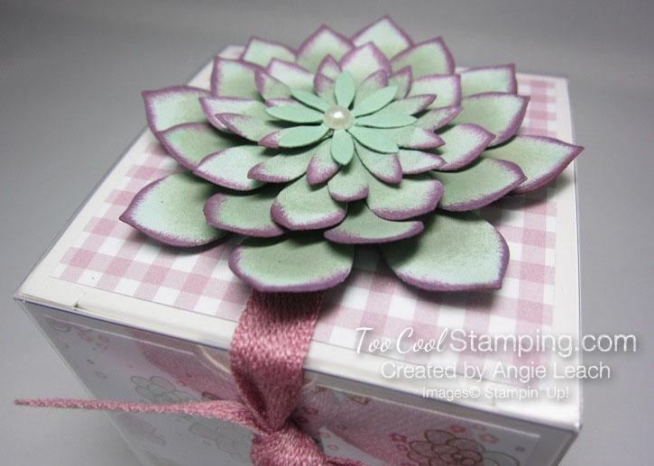 Succulent gift box 2