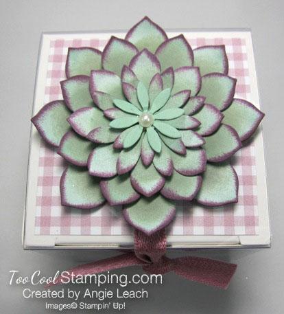 Succulent gift box 4