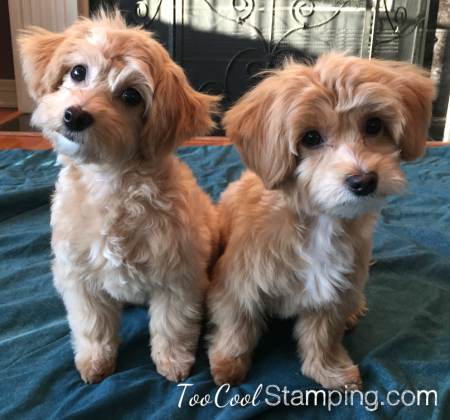 Millie & jax after haircuts