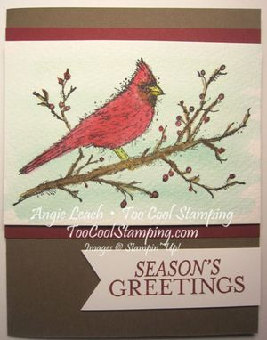 Beauty cardinal - greetings