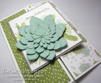 Oh so succulent gate fold - olive 2