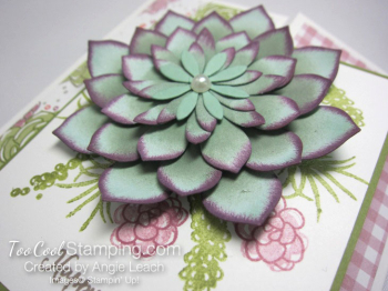 Oh so succulent gate fold - sugarplum 4