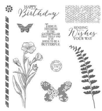Butterfly basics 137154G