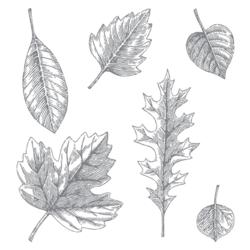 Vintage leaves 138802G