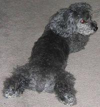 Lucky cute dog butt