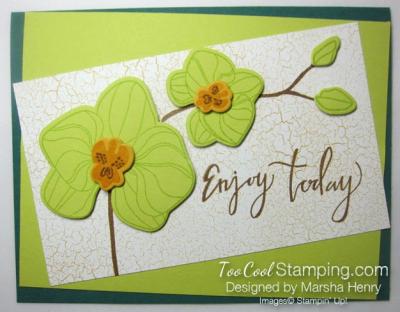 Marsha Orchid 1