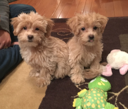 Jax & Millie too cute - first day edit 1