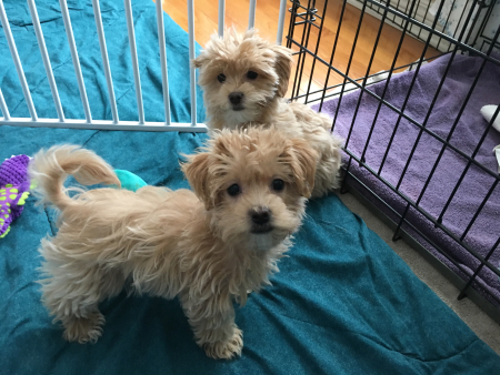 Millie & Jax first day 1