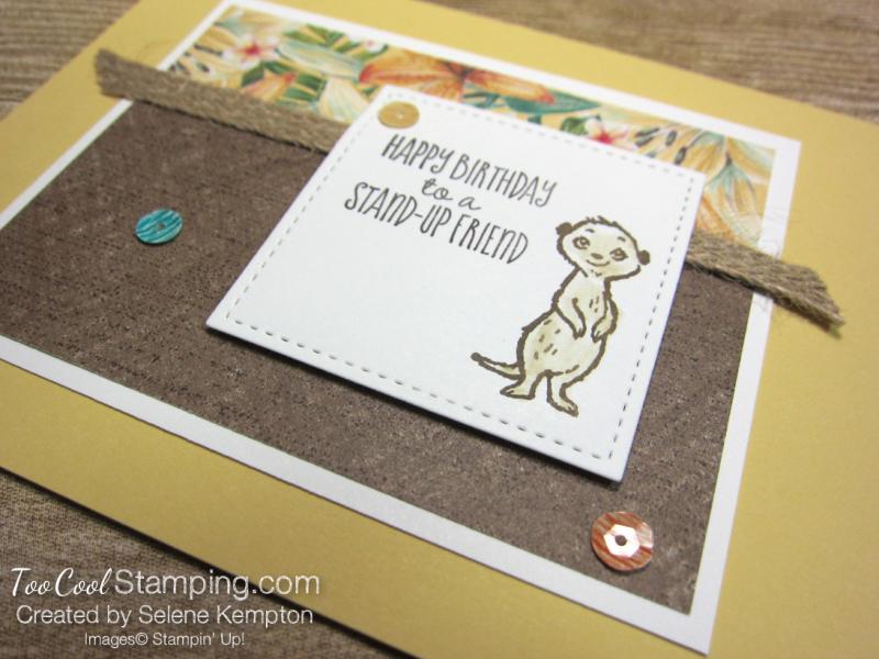 Meerkat stand up friend - kempton 2