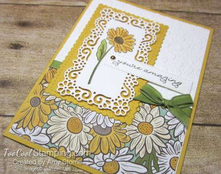 Ornate garden amazing daisy - storrie 2