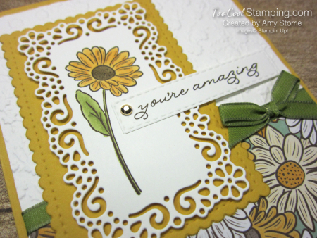 Ornate garden amazing daisy - storrie 3