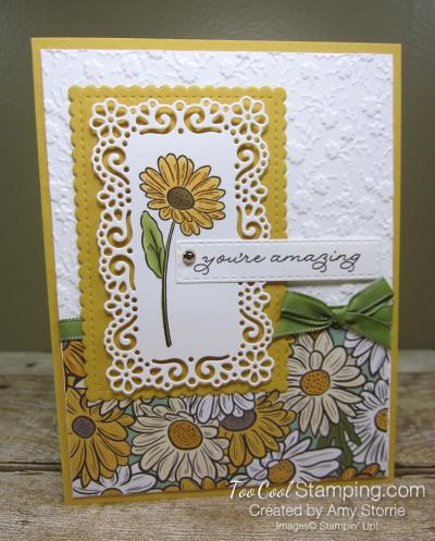 Ornate garden amazing daisy - storrie 1