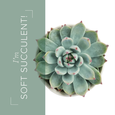 03.21_SHAREABLE1_SUCCULENT_IN_COLORS_EN
