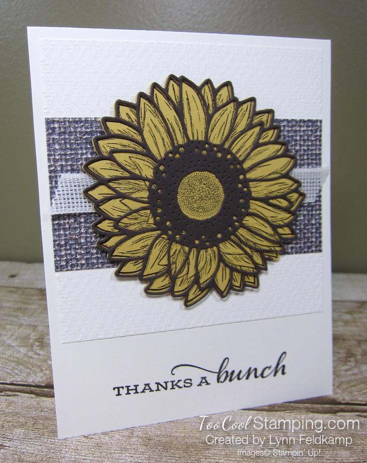Celebrate sunflowers thanks a bunch - feldkamp 1