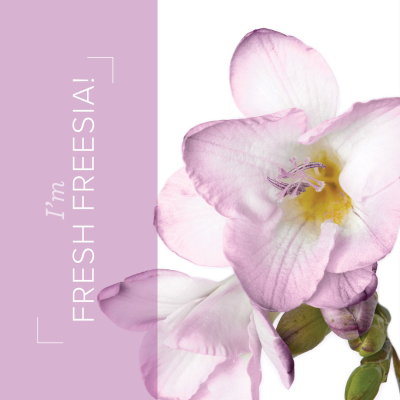 03.21_SHAREABLE1_FREESIA_IN_COLORS_EN